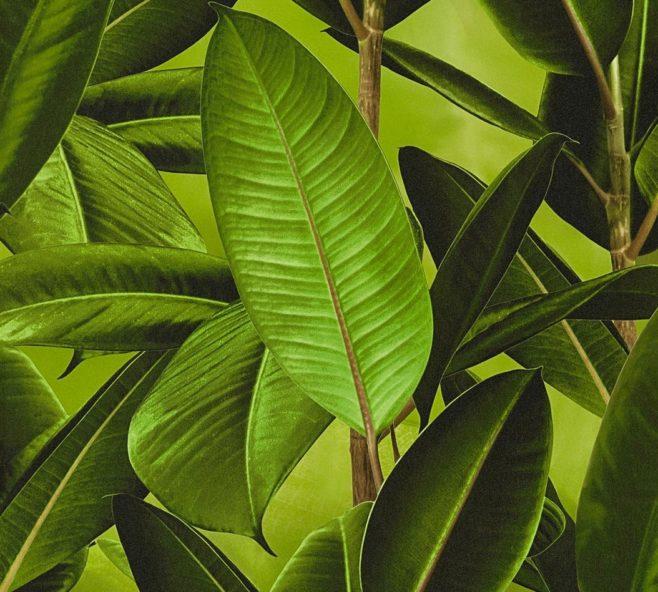caribbean banana, tropical desire, IPHEPHA - Das perfekte Wandkleid, Tapeten Online-Shop