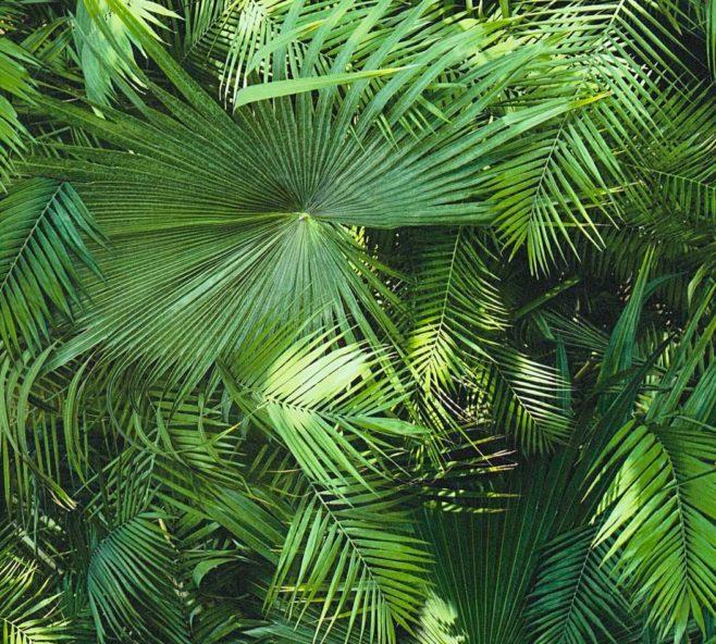 jungle fever, tropical desire, IPHEPHA - Das perfekte Wandkleid, Tapeten Online-Shop